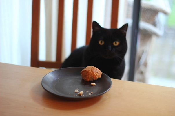 Cat likes muffin