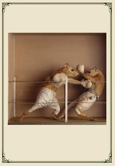 mouse taxidermy