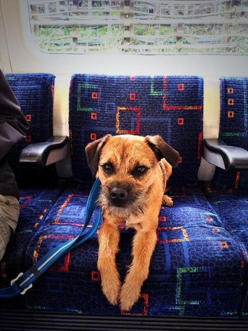 London Underground dog