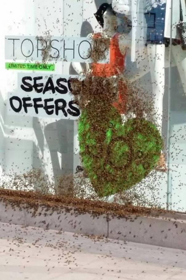 Top Shop Bees