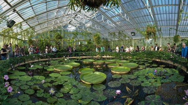 Waterlily House in Kew Gardens